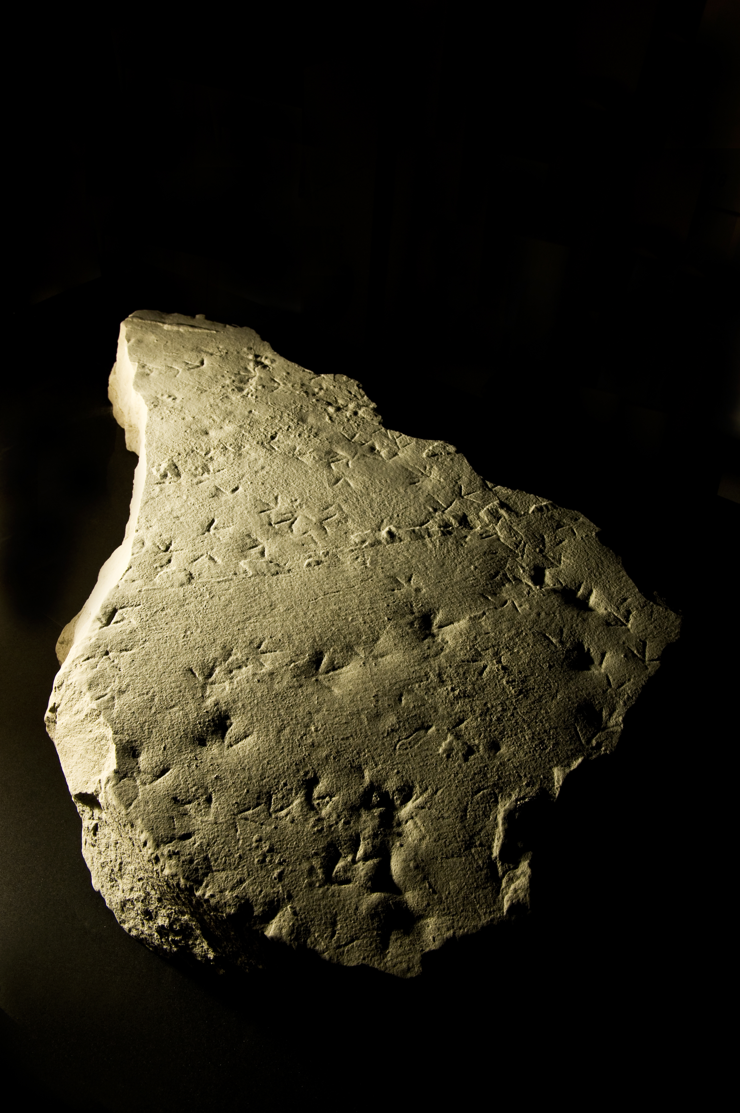 Fossilized sandpiper tracks found in the cave during construction.